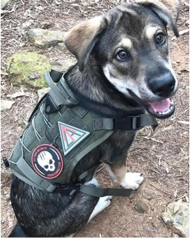 Tactical Military Service Training Hiking Dog Harness Vest