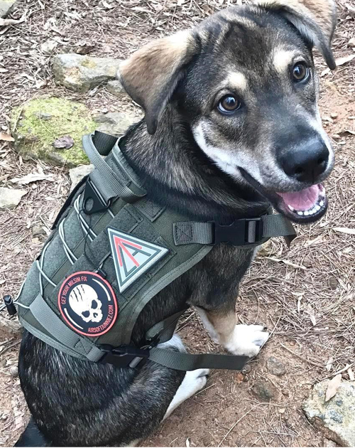 Dog Harness For A German Shepherd Puppy